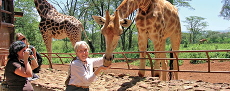 man feeding giraffe